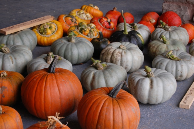 Pumpkins, Onion squash, Crown Prince and Turks Turbans