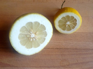 A Cedro lemon next to a large Amalfi lemon