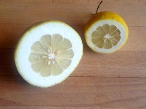 A Cedro lemon next to a large Amalfi lemon